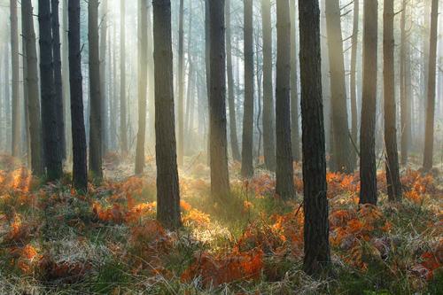 Solska Primeval Forest