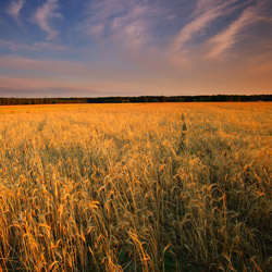 Równina Lubartowska, Kozłowiecki Park Krajobrazowy