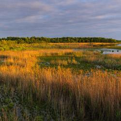 Polesie Zachodnie, Poleski Park Narodowy