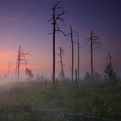 Rezerwat przyrody Obary, Puszcza Solska