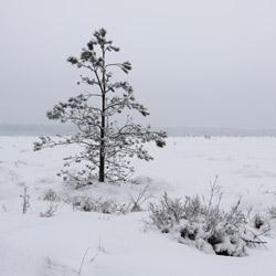 Obary Nature Reserve in Solska Primeval Forest
