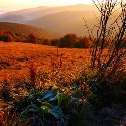 Western Bieszczady, Bieszczady National Park