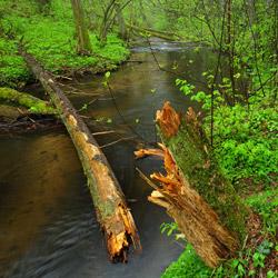 Rzeka Szum, rezerwat przyrody Szum, Roztocze Środkowe