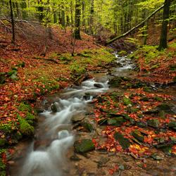 Potok Rzeka, Bieszczadzki Park Narodowy, Bieszczady Zachodnie