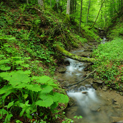 Potok, Park Krajobrazowy Doliny Sanu, Bieszczady Zachodnie