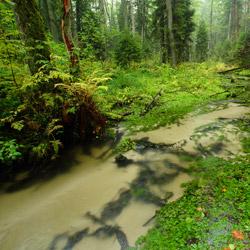Potok Jeleń, rezerwat przyrody Nad Tanwią, Park Krajobrazowy Puszczy Solskiej, Roztocze Środkowe