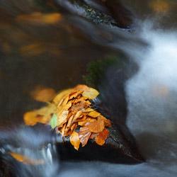 Potok Hylaty, Park Krajobrazowy Doliny Sanu, Bieszczady Zachodnie