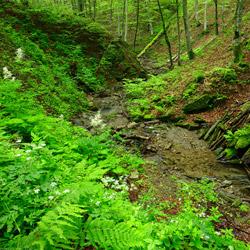 Bieszczady National Park, Western Bieszczady