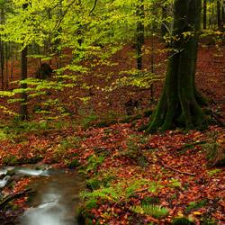 Bieszczadzki Park Narodowy, Bieszczady Zachodnie
