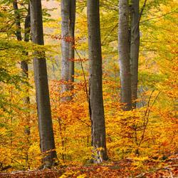 Południoworoztoczański Park Krajobrazowy, Roztocze Wschodnie (Południowe)