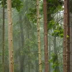 Popradzki Park Krajobrazowy, Beskid Sądecki