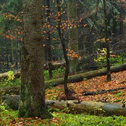 Roztocze National Park, Central Roztocze