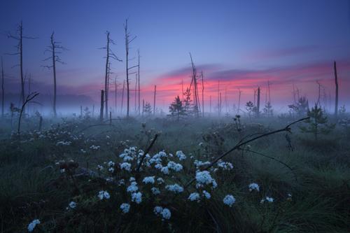 Grzegorz Szkutnik | Fotografia przyrodnicza i krajoznawcza, Nature and landscape photography